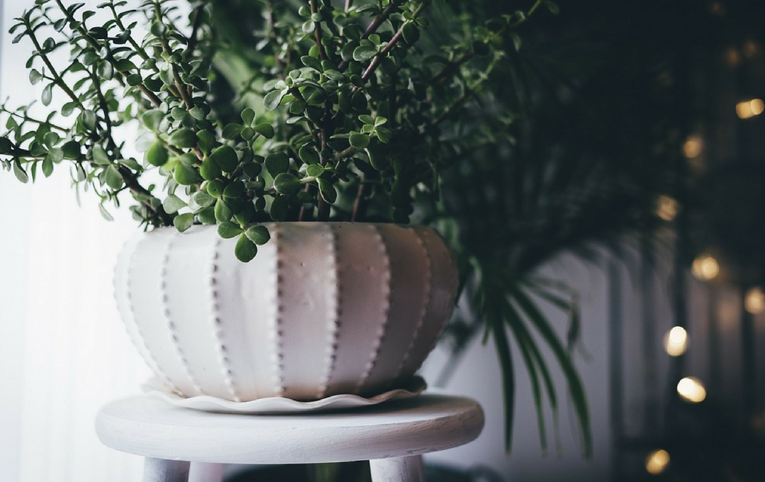10 mandamentos da decoração para casa alugada