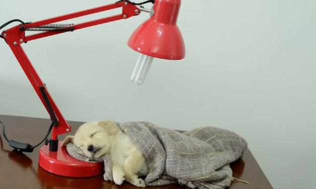 7 passos para adotar um animal de estimação